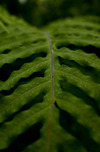 Phipps Conservatory - Leaf