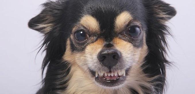 Malos hábitos de perros y cómo solucionarlos