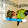 Tips on Bathing Your Bird – Paco Parrot's Blog