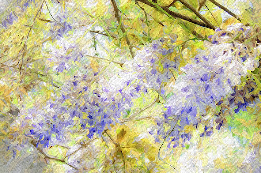 Wistful Wisteria 1 by Andee Photography