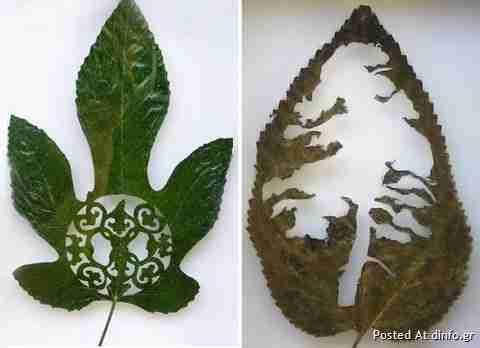 Έργα τέχνης από φύλλα δέντρων