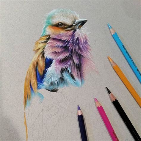 images  colored pencil animals  pinterest