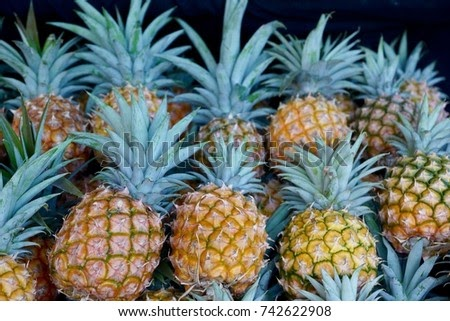 Fresh pineapple fruits lined up at the markets..  Pineapples are a tropical plant with an edible multiple...