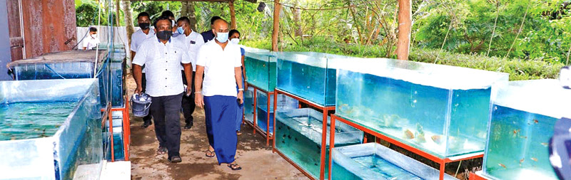 State Minister Duminda Dissanayake along with officials inspecting an ornamental fish breeding farm in Anuradhapura.