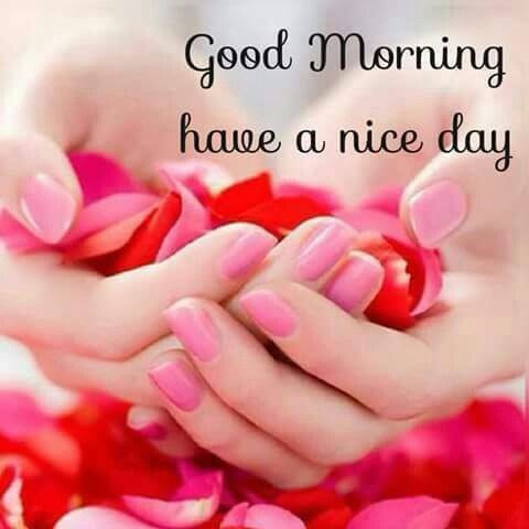Good Morning Hope You Have A Nice Day Pictures Photos And Images