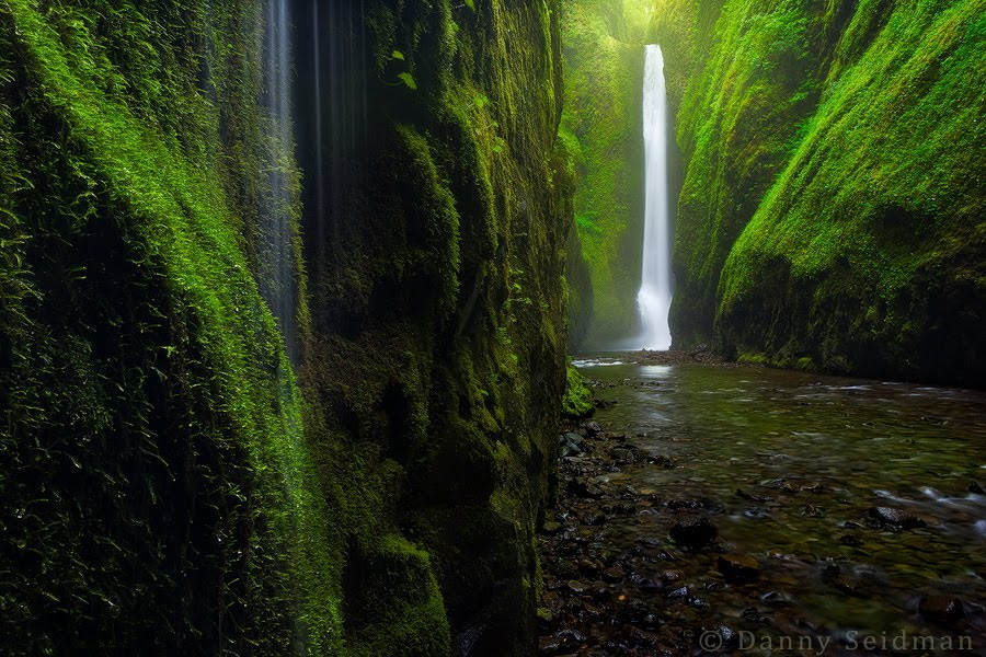 Nature Blog
