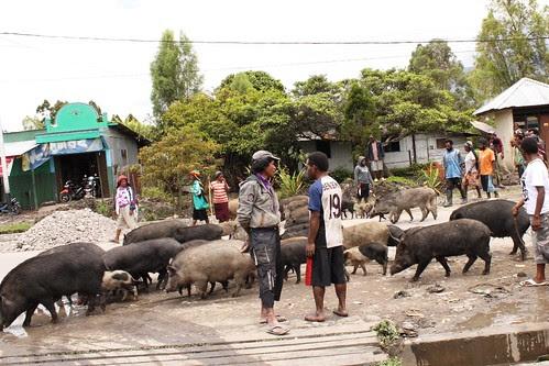Babi untuk bayar denda