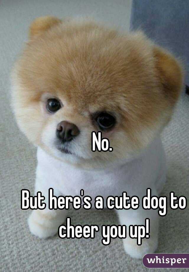 No But Heres A Cute Dog To Cheer You Up