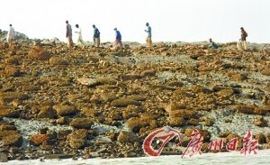 """巴基斯坦震出小岛专家称系泥土堆积注定""""短命"""""""