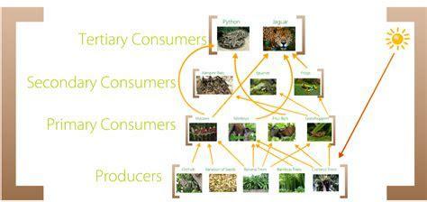 Food Web   Tropical Rainforest Biome