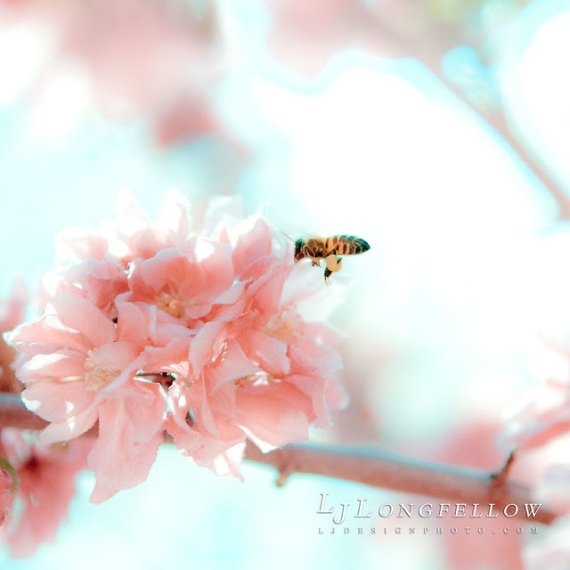 Pink Bee Flying 33/365