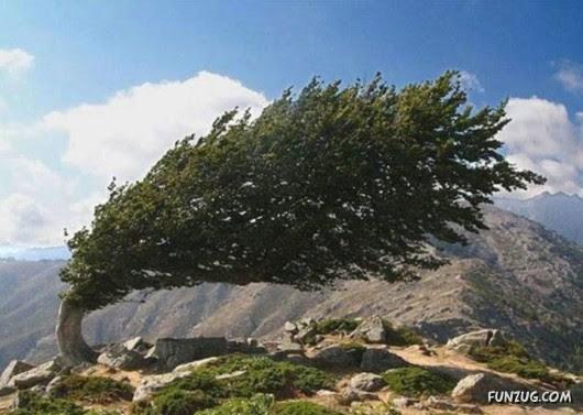 trees, unusual