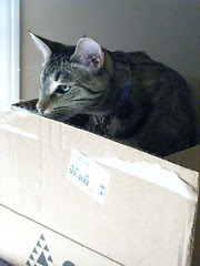 Maggie claims the box