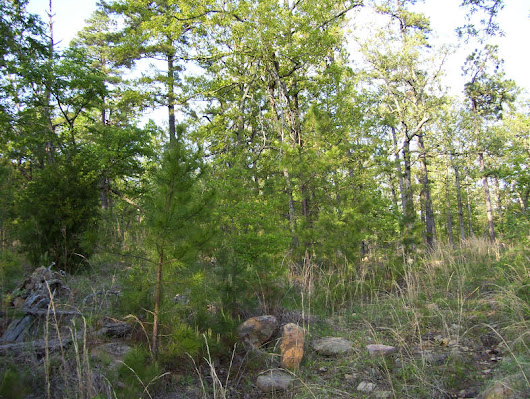Enjoy Pine Mountain Ranch, OK, 5 Acres, and Special Cash Lots; $1.8K to $3K
