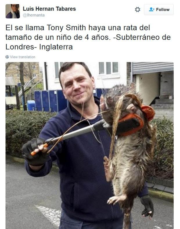 Imagem de Tony Smith segurando o enorme roedor fez sucesso nas redes sociais (Foto: Reprodução/Twitter/Luis Hernan Tabares)