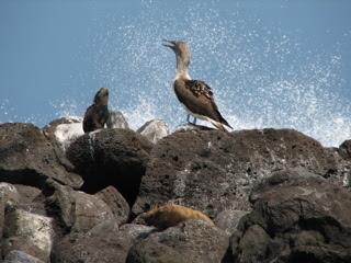 Galapagosii2
