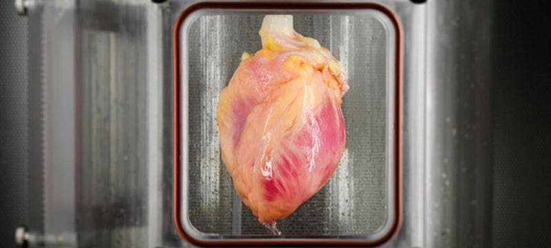 Científicos logran cultivar el primer tejido cardíaco funcional a partir de células madre