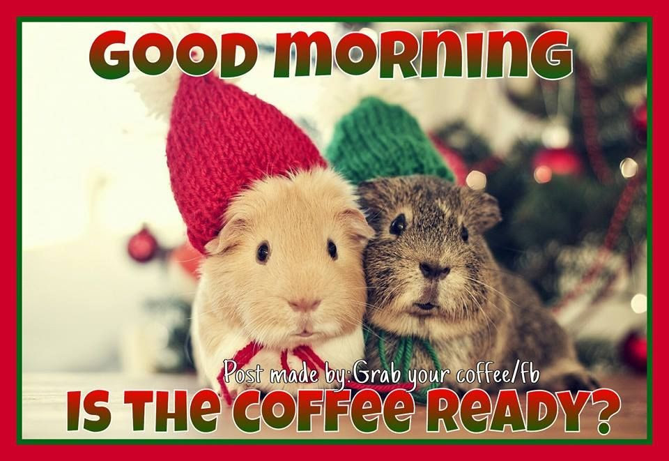 Is The Coffee Ready Good Morning Pictures Photos And Images For