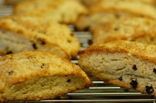 Classic Currant Scones Cooling On A Wire Rack by Eve Fox, Garden of Eating blog