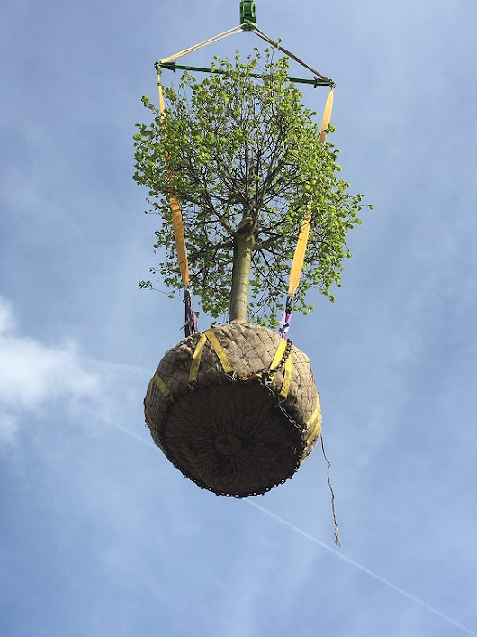 Craning trees into rear garden | Practicality Brown | London