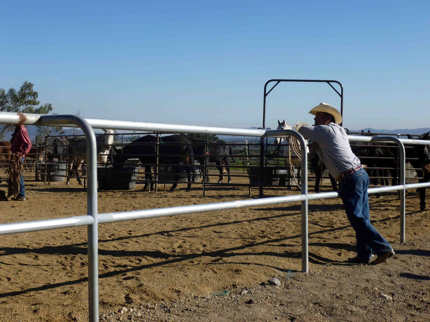 mules essay About mule day what is mule day  the winner is selected based on an essay and other criteria the annual mule pull contest requires a pair of mules to pull a.