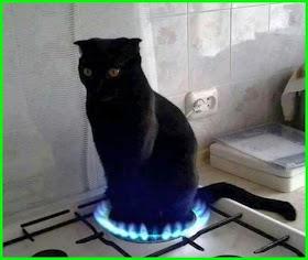 Kucing Lucu Sekali Di Dunia