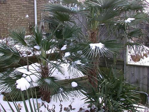 Frozen palms