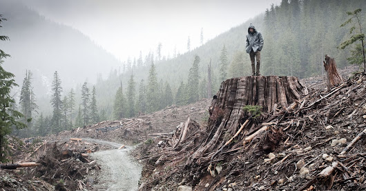 Stop felling Canada's centuries-old forest giants for lumber!