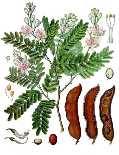 Recept, tamarinde sap maken