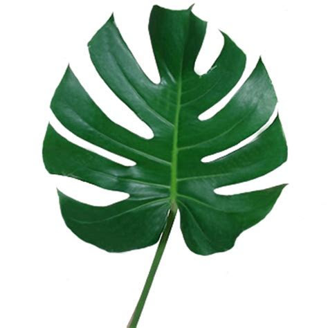 Monstera Leaves Tropical Greenery   Wedding Flowers