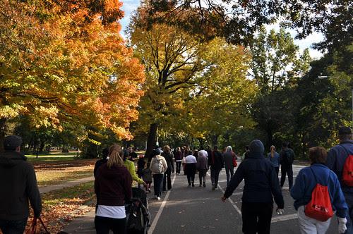 Trees on Walkathon
