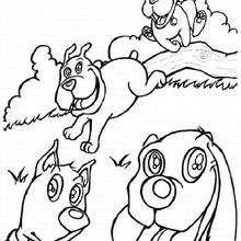 Dibujos Para Colorear Perros En El Campo Eshellokidscom