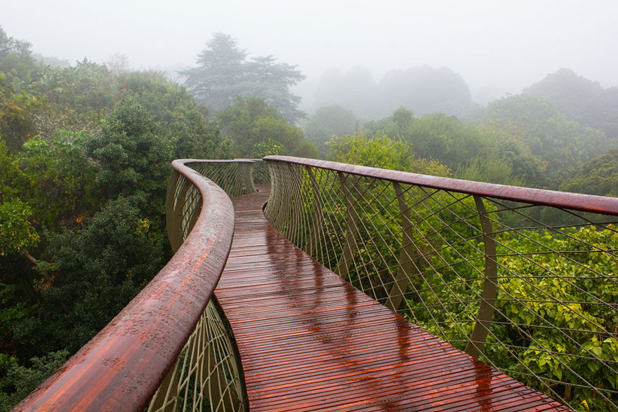 tree-canopy-walkway-path-kirstenbosch-national-botanical-garden-8