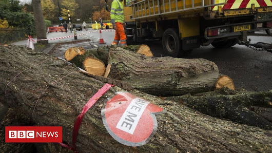 Sheffield tree felling: More saved after deal brokered - BBC News