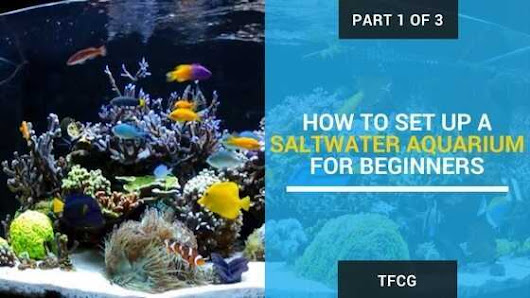[Video] 5 Reliable Ways To Set Up A Saltwater Aquarium For Beginners
