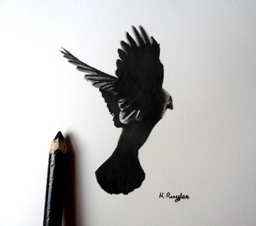Jackdaw 7 original crow art | Charcoal Drawing | North Yorkshire | Drawing In Dark