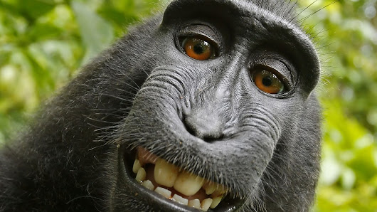 The Selfie Monkey Goes to the Ninth Circuit