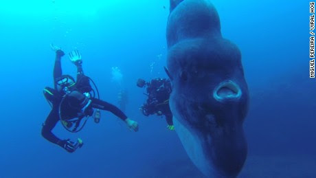 Divers dwarfed by massive creature - CNN Video