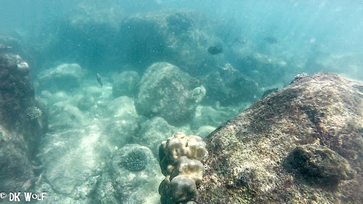 Snorkeling at Pigeon Island National Park