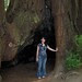 Avery with redwood tree