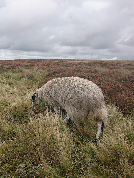 Brinscall to Great Hill – Walking in the Lancashire Moors