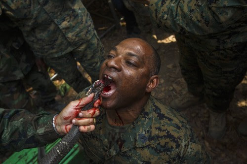 "A U.S. Marine drinks the blood of a cobra during a jungle survival exercise with the Thai Navy as part of the ""Cobra Gold 2014"" joint military exercise, in Chanthaburi province"
