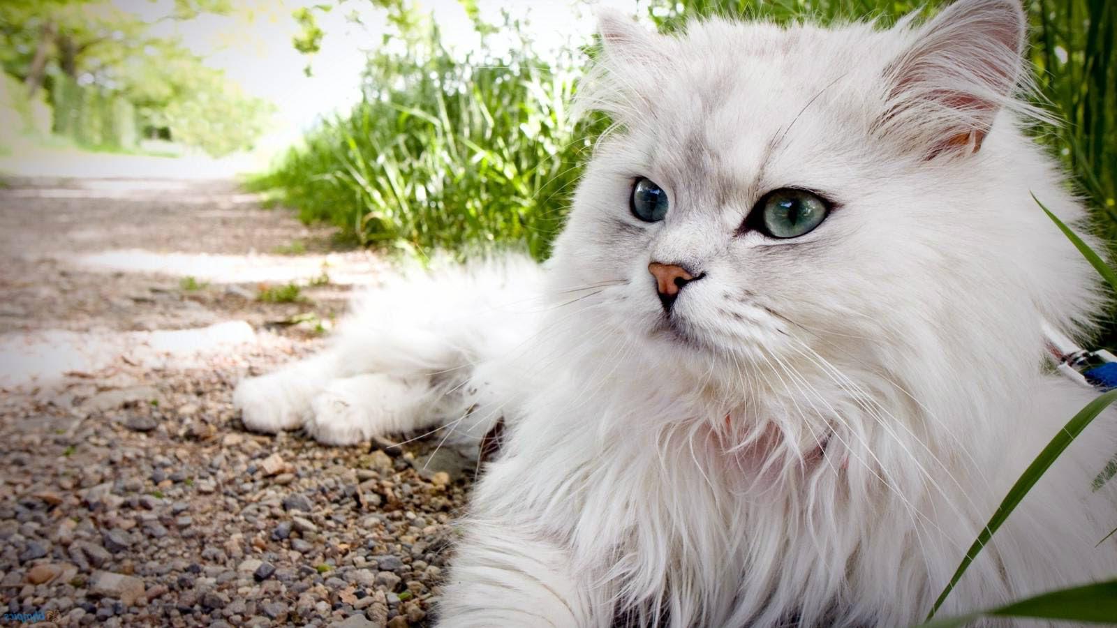 73+ Gambar 2 Dimensi Kucing Kekinian