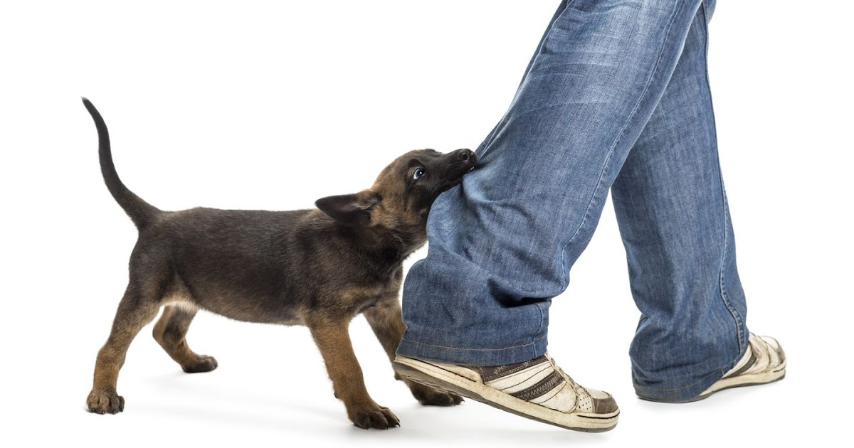 Pet Insurance If My Dog Bites Someone - insurance