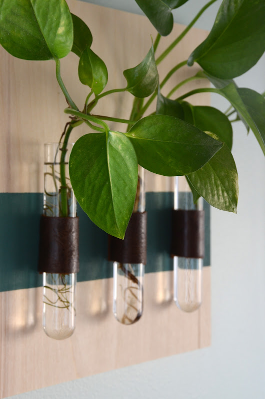 Easy DIY Wall Mounted Test Tube Vases