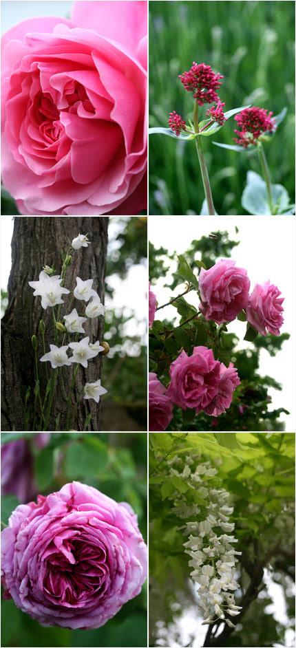 Rose e altri fiori