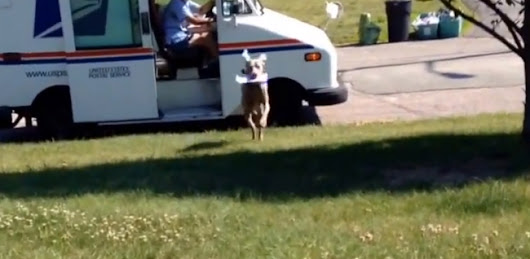 This Dog Chases the Mailman Every Day, But It's Not What You Think