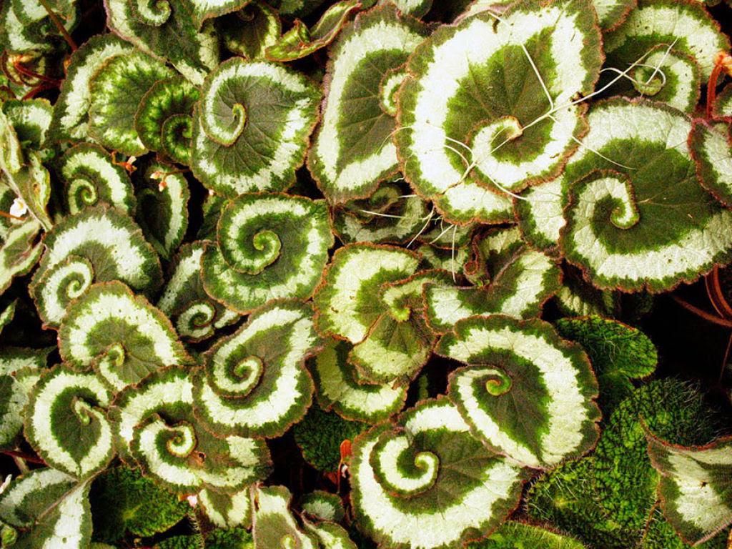 25 Fotografias de plantas para os amantes da matemática 12