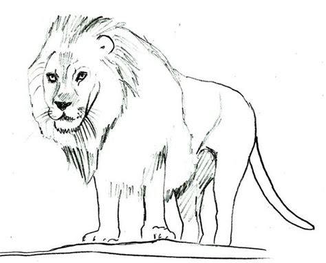 gambar sketsa singa simple  mudah dicoba gambar mania