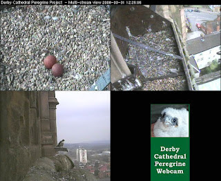 Derby webcam multi-image view. Click to enlarge
